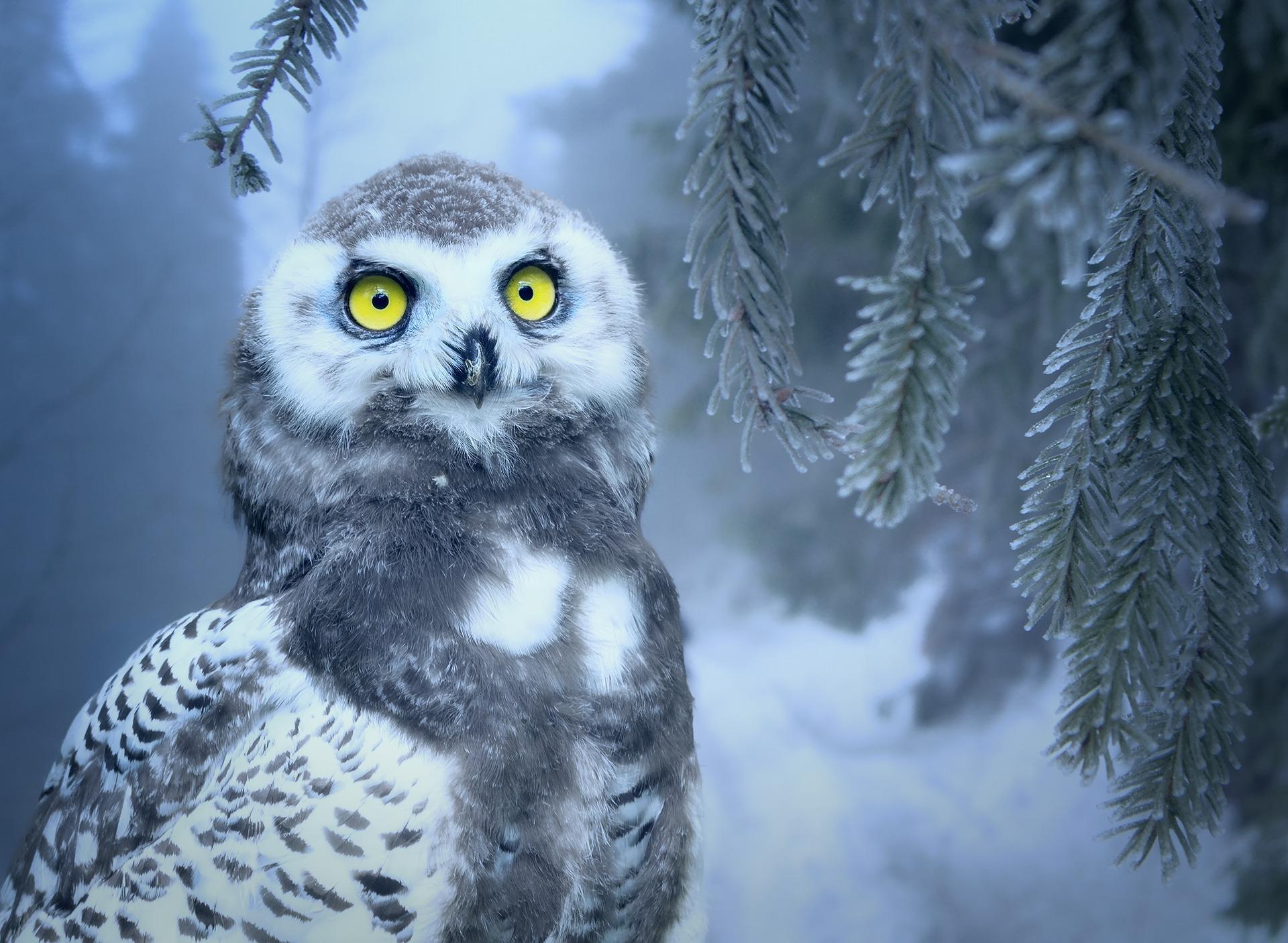 owl-3184032_1920.jpg